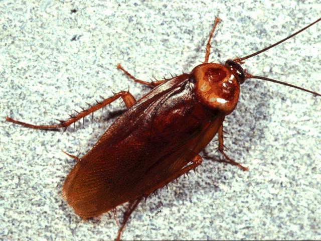 Mẹo diệt Kiến, Gián, Muỗi, Ruồi đơn giản