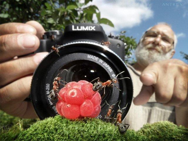 Bộ ảnh độc đáo về thế giới loài kiến