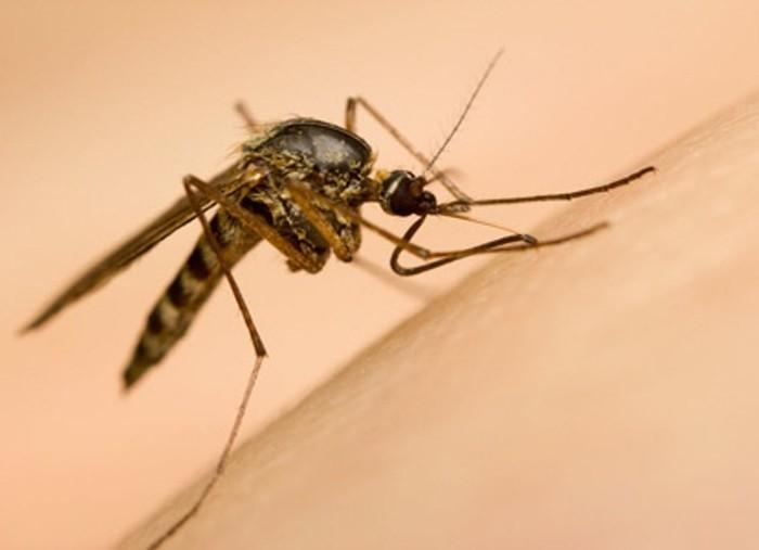 Loại muỗi nào truyền bệnh sốt xuất huyết?