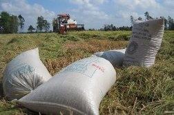Lúa gạo tăng giá ngoạn mục