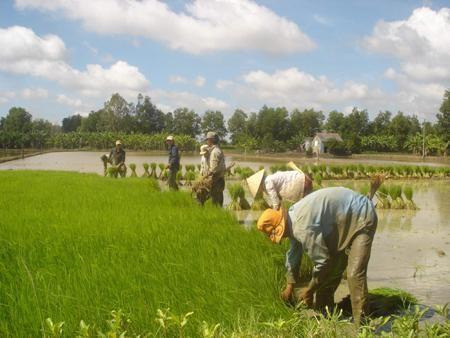 Vụ Đông Xuân 2012-2013 ở Nam bộ